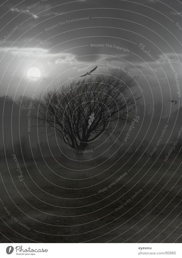 Tree Calm Dark Sadness Field Fog Sleep Gloomy Exceptional Creepy Moon Tree trunk Eerie Swallow Vail Doze