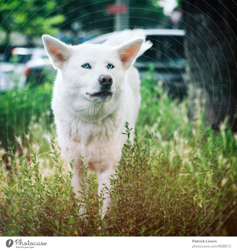 Dog Nature City Beautiful White Animal Environment Movement Meadow Exceptional Wild Elegant Wild animal Authentic Poverty Elements
