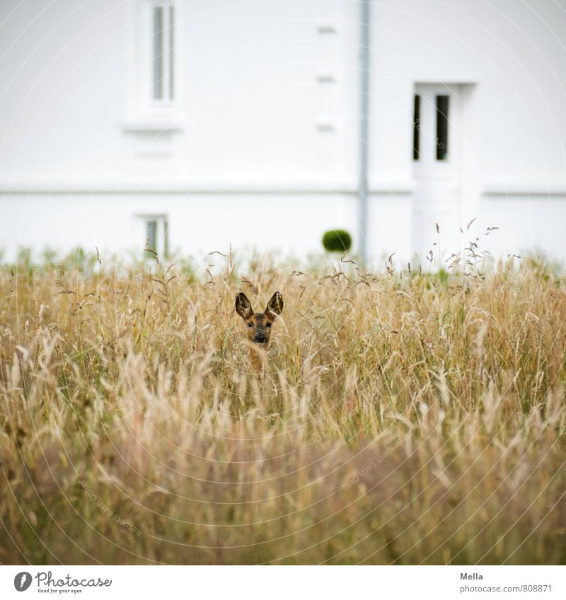 Nature Plant Summer Landscape House (Residential Structure) Animal Environment Window Meadow Grass Natural Freedom Facade Field Door Wild animal