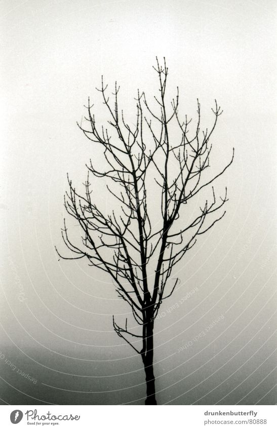 lonely tree Tree Tree trunk Fog Black Dreary Loneliness Cold Dark Winter Unclear Remote Gloomy Branch Twig Sky opacity Black & white photo Sadness