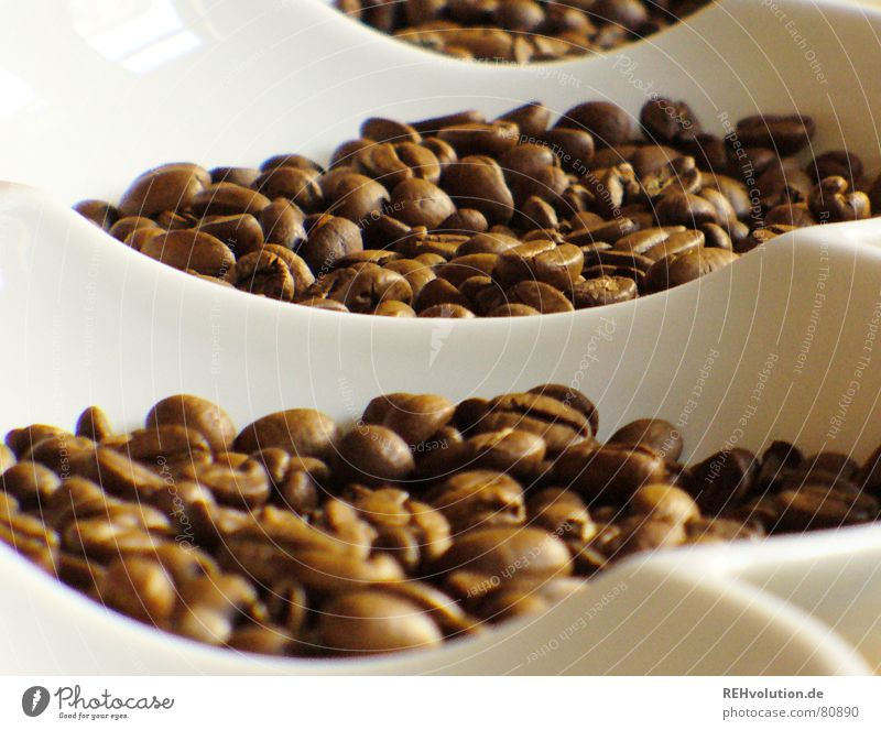 Warmth Brown Coffee Physics Delicious Bowl Alert Beans Coffee bean Caffeine