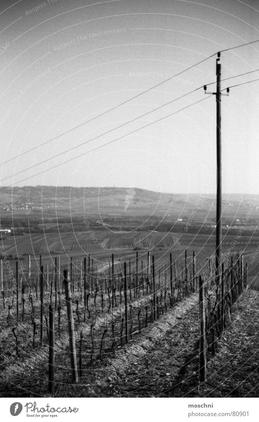 vineyards Vineyard Bingen Electricity pylon Vantage point Far-off places Winegrower aerial perspective Black & white photo wine lovers