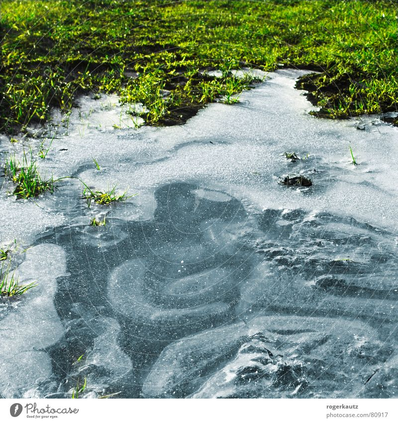 Winter Cold Meadow Ice Field Frost Frozen Puddle Alb
