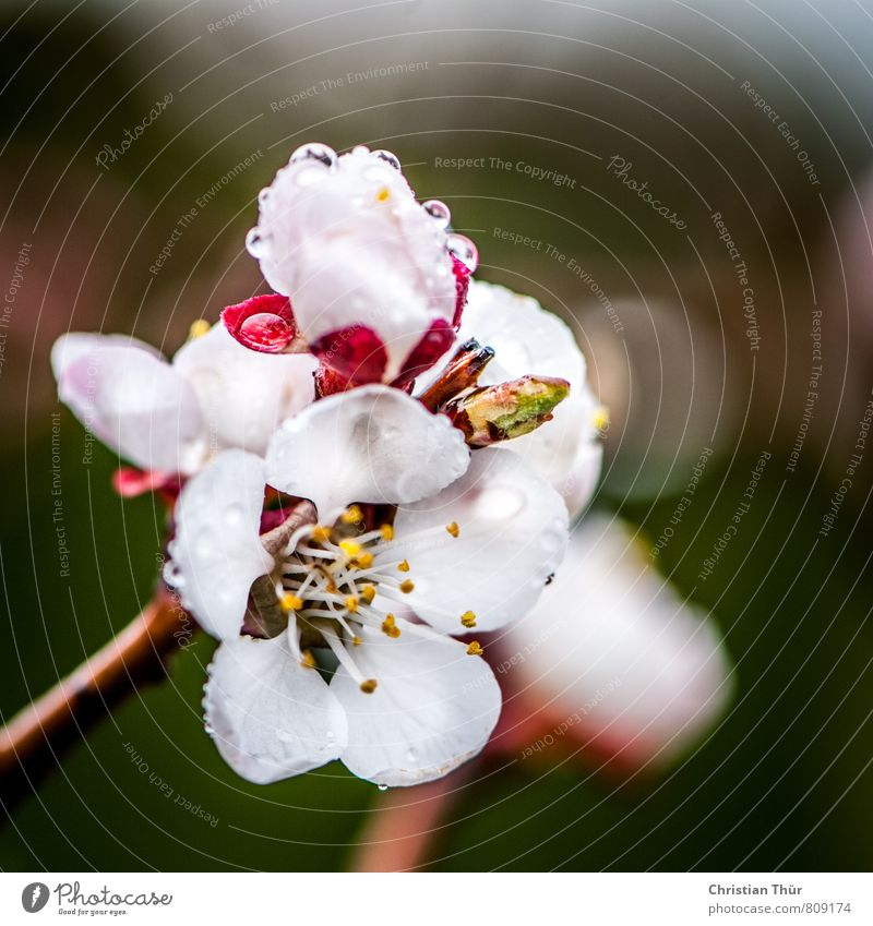 Nature Plant Green White Tree Environment Meadow Blossom Spring Healthy Brown Pink Rain Growth Esthetic Drops of water