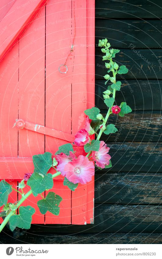 colour matters Summer Summer vacation House (Residential Structure) Plant Flower Blossom Hut Wall (barrier) Wall (building) Window Wood Growth Beautiful Green