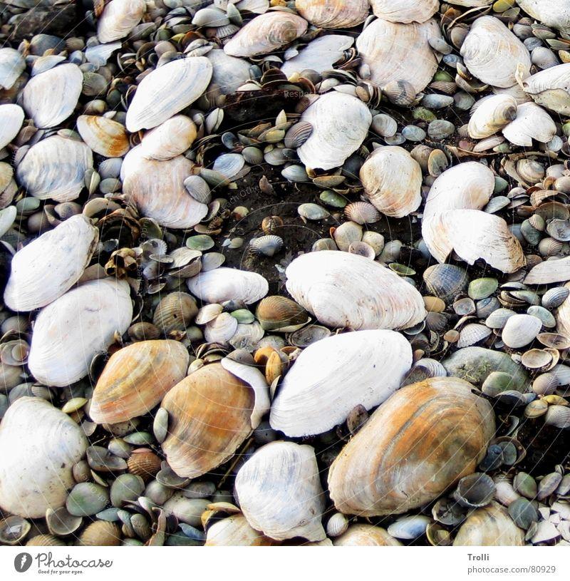 Big Family Multiple Multicoloured Mussel Beach Ocean Coast Many Earth Orange