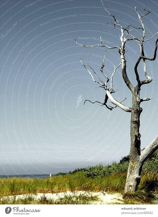 tree death Logging Tree Ocean Summer Tree trunk Death Water Transience afforestation Baltic Sea Beach dune
