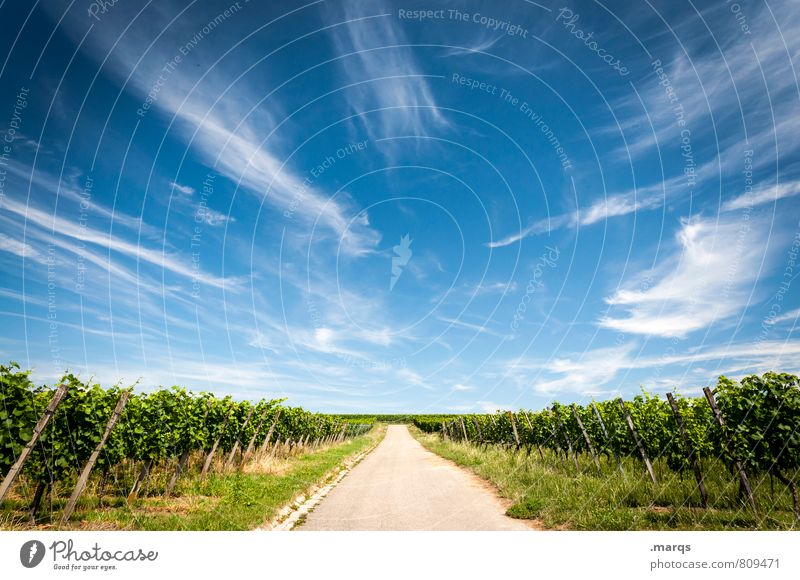 New wine Agriculture Forestry Nature Landscape Sky Clouds Summer Autumn Climate Beautiful weather Field Wine growing Vine Street Lanes & trails Horizon Symmetry