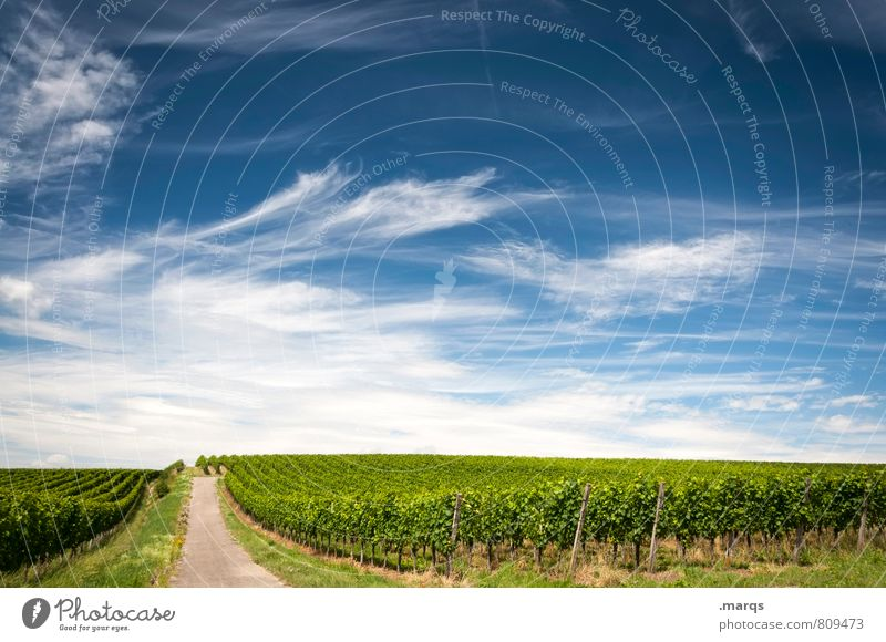 viticulture Trip Environment Nature Landscape Sky Clouds Horizon Summer Autumn Beautiful weather Plant Agricultural crop Vine Wine growing Winery Street