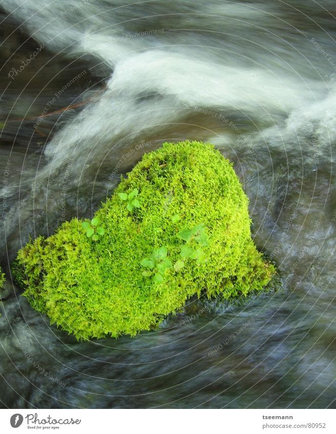 Green in the river Americas Grass Brook River USA Knoll Long exposure Oregon Fresh Water mt. hood mt hood Movement motion light cascades mount hood creek Change