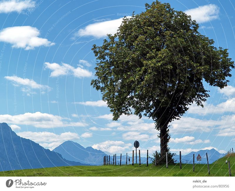 My friend the tree II... Deciduous tree Electrified fence Tree Meadow Fence Clouds Allgäu Bavaria Green Grass Green space Alpine pasture Signage Village green