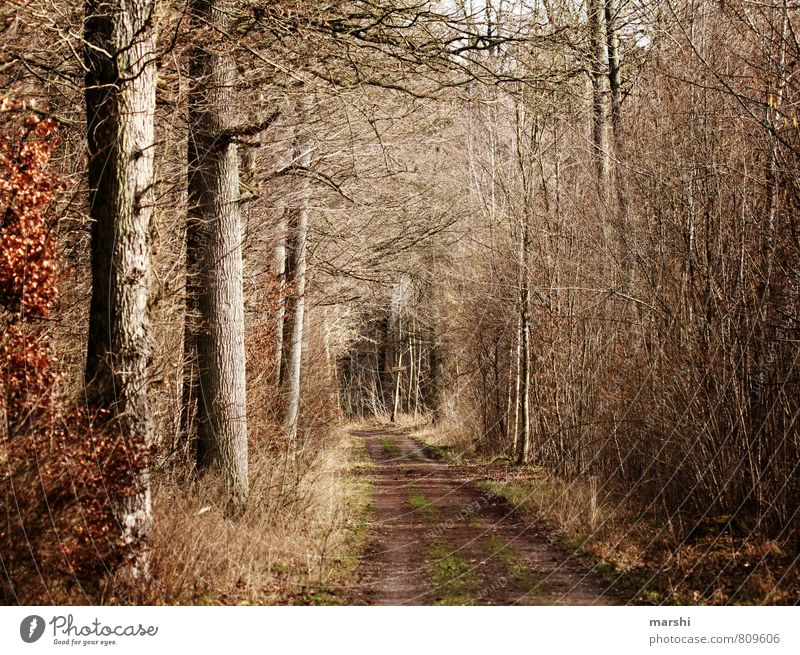 Nature Plant Tree Landscape Forest Environment Autumn Lanes & trails Moody Footpath Autumnal