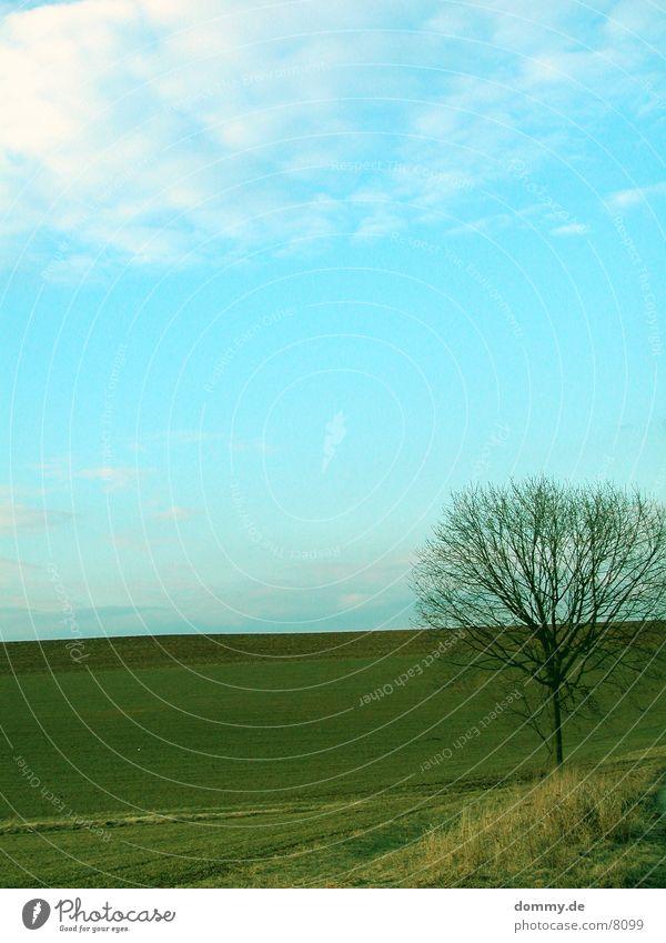 Stand alone Meadow Tree Sky kaz