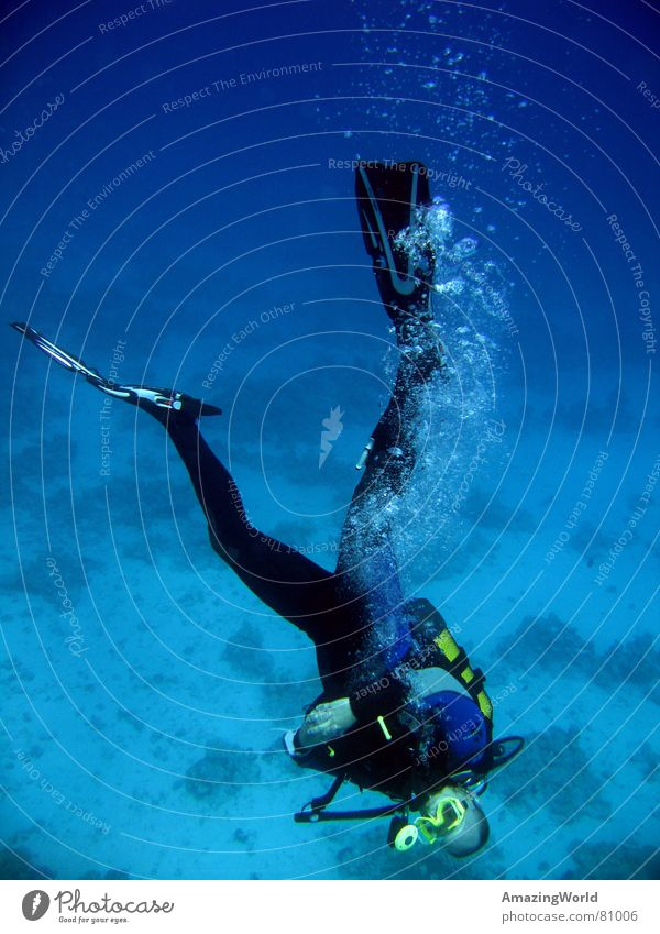 Chill out Aquatics Infinity Diver Ocean Egypt Return Go crazy Water Joy Underwater photo Blue Deep Freedom fun