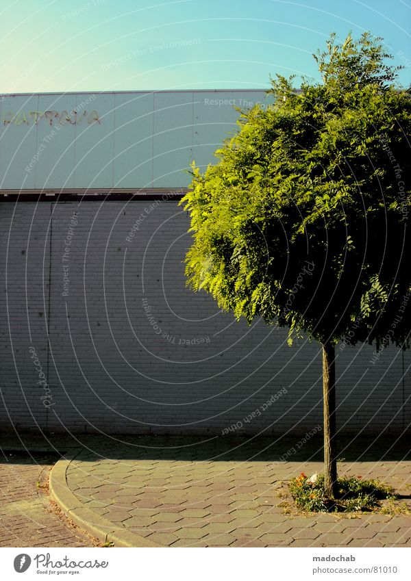 Nature Sky Tree Green City Leaf Street Wall (building) Grass Wall (barrier) Park Power Environment Earth Force Fresh