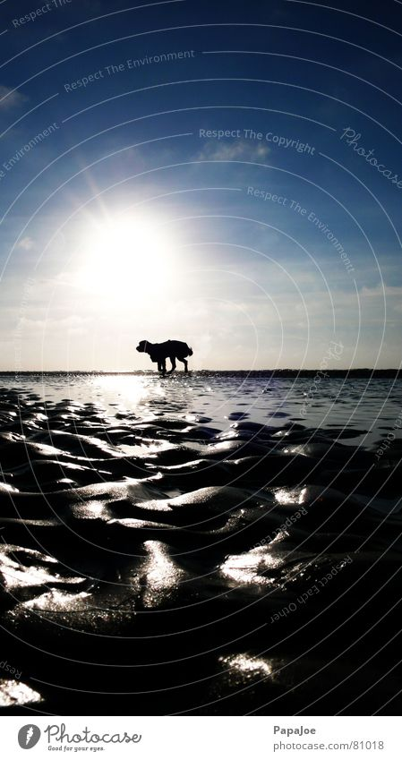 Nature Sun Ocean Blue Winter Beach Clouds Animal Cold Dog Ice Lighting Coast Wind Weather Environment