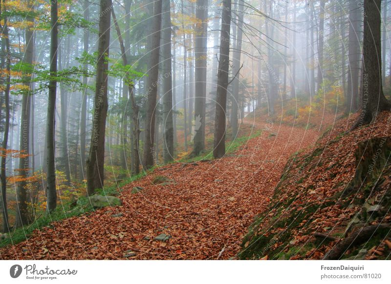 Tree Green Red Leaf Yellow Street Forest Dark Autumn Lanes & trails Orange Hiking Fog Trip Circle Floor covering