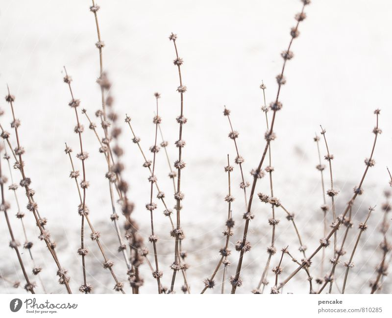Nature White Summer Landscape Winter Snow Grass Sand Brown Wild Bushes Elements Dry Thin Seed Delicate