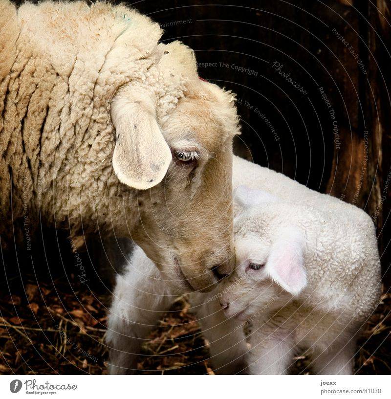 Animal Warmth Baby animal Love Emotions Small Brown Idyll Stand Safety Protection Ear Trust Animal face Near Relationship