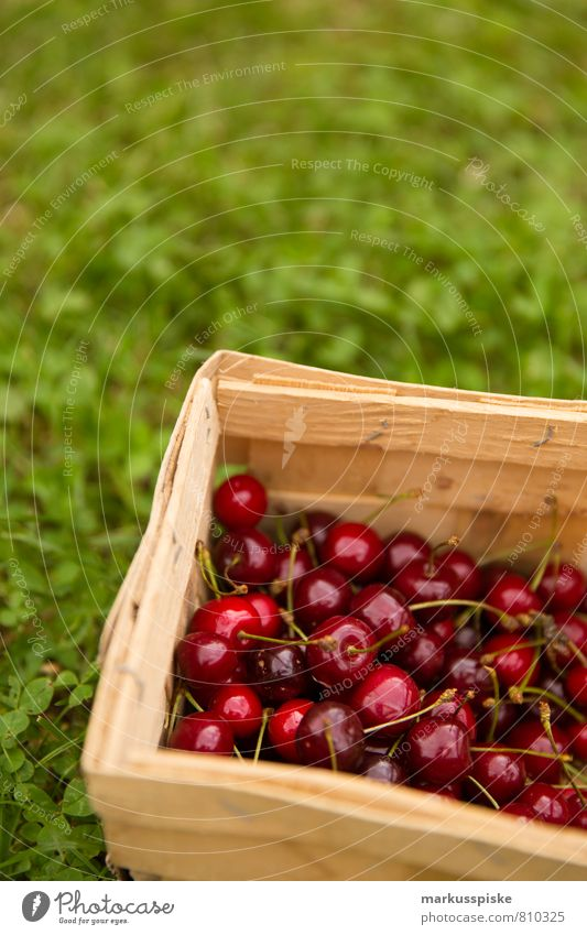cherry harvest Food Fruit Cherry Nutrition Picnic Organic produce Vegetarian diet Diet Fasting Slow food Healthy Eating Living or residing Garden Nature Plant
