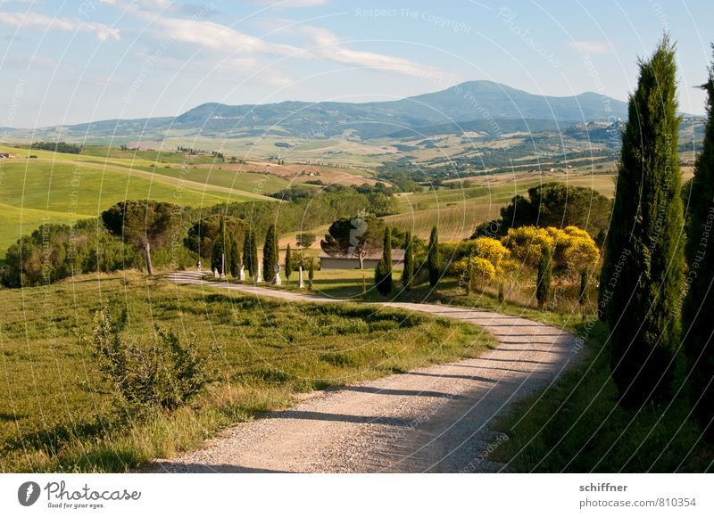 The way to the postcard Environment Landscape Plant Sunlight Beautiful weather Hill Kitsch Tuscany Italy Exterior shot Deserted