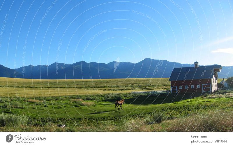 Idyllic Oregon I - Panorama Hill Meadow Grass Green Horse Red Barn USA Americas Sky Wallowa Mountains Panorama (View) Blue hills mountains eastern oregon