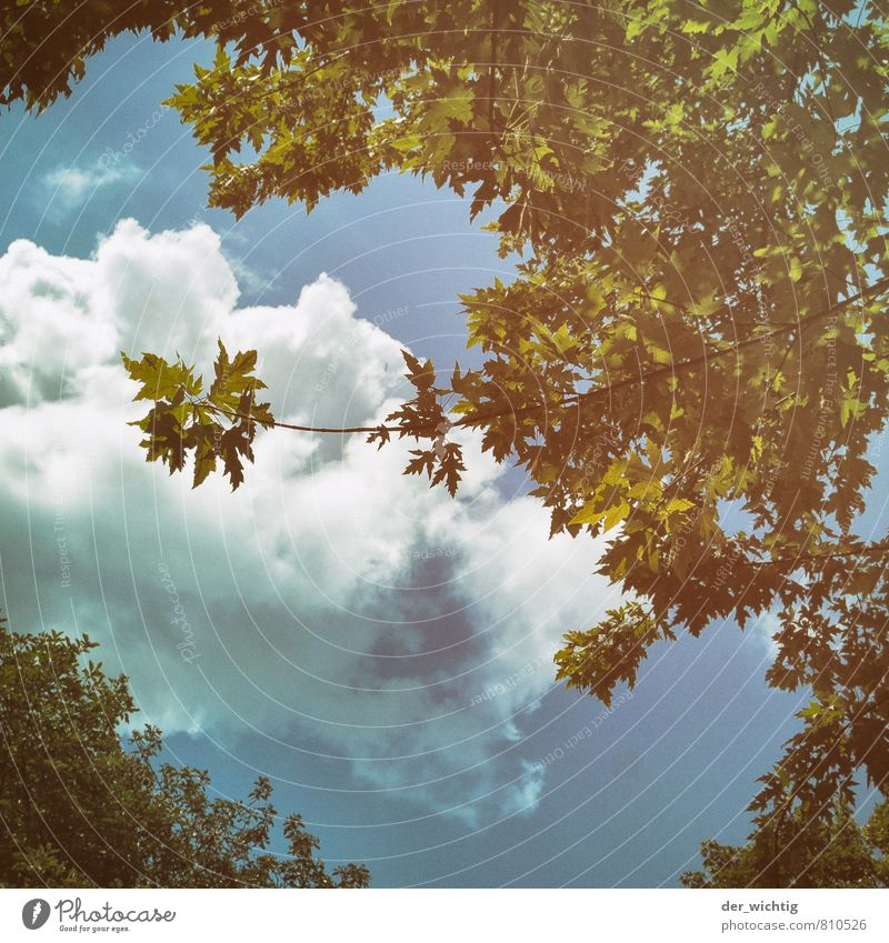 Sky Nature Blue Plant Beautiful Green White Summer Sun Tree Relaxation Clouds Environment Yellow Air Park