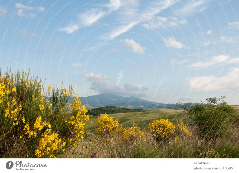 Sky Nature Plant Tree Flower Landscape Clouds Forest Yellow Mountain Meadow Grass Field Bushes Beautiful weather Hill