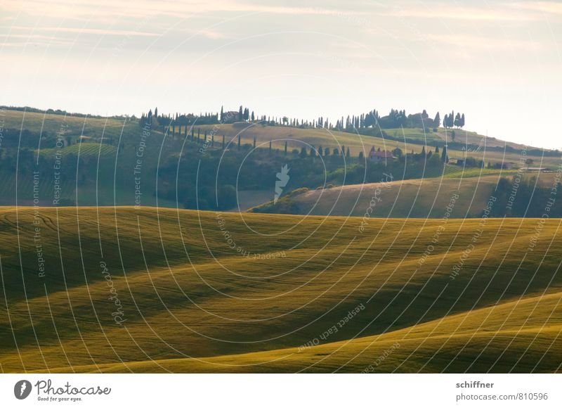 Waving land Landscape Sunrise Sunset Summer Beautiful weather Plant Tree Meadow Field Forest Hill Green Waves Swell Wavy line Cypress Stone pine Tuscany Italy