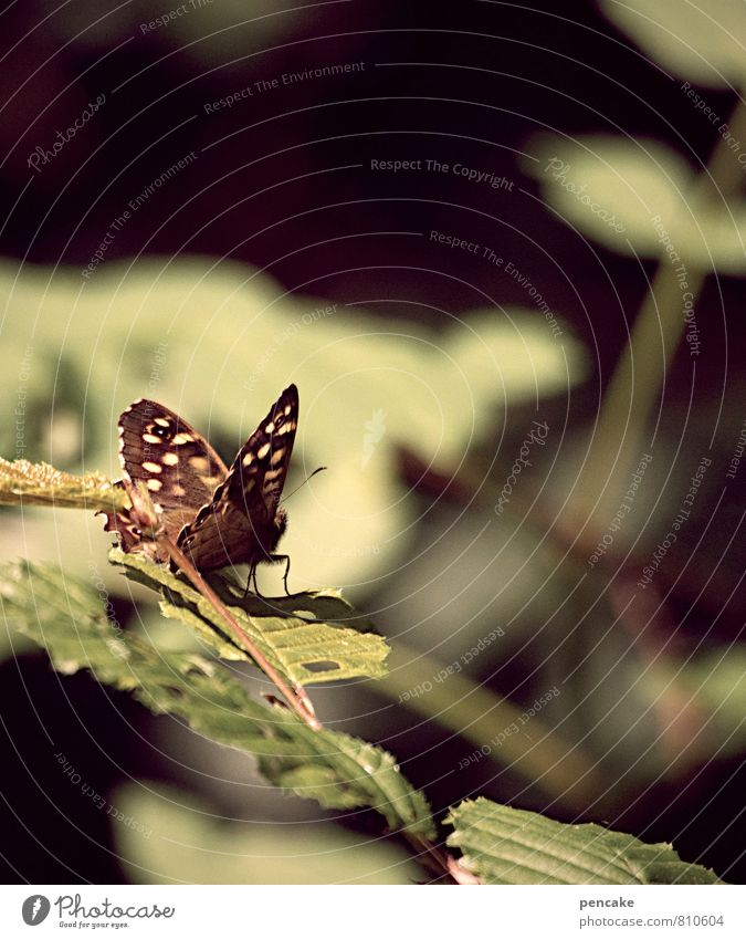 Timeless Nature Summer Autumn Beautiful weather Bushes Leaf Forest Animal Butterfly 1 Esthetic Brown Green Flying Looking Vantage point Relaxation