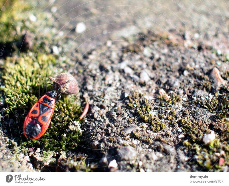 a bugs life Hiking Beetle Sphere Life kaz