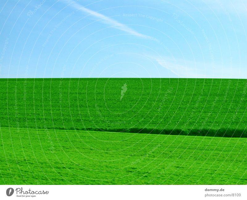 Sky Green Blue Meadow Grass