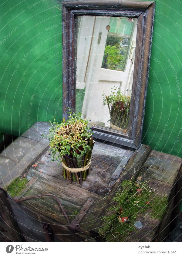 Fairies Altar Jinxed Treasure chest Wood Flower Mirror Green Fairy tale Crate Flowerpot Plant Planning Room Mysterious Reflection Wood flour House of worship