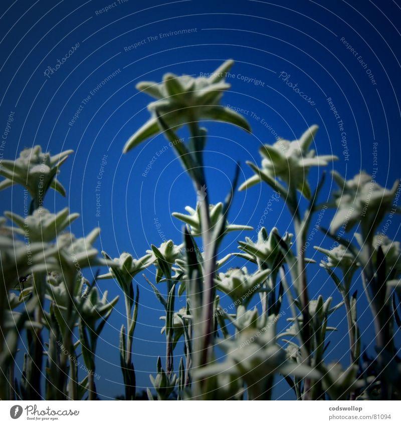 spacefleur Flower Massive Obscure giant wierd Blue Funny strange flowers Universe