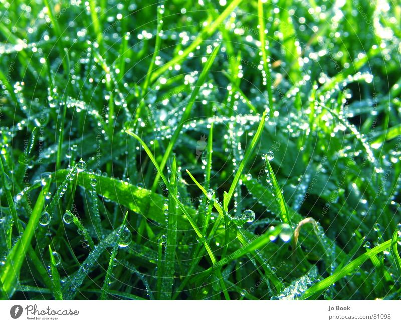 Green grass Blue glass Grass Beautiful Meadow Dew Drops of water Grassland Heavenly Slick Tasty Lawn Nature Water Life a feast for the eyes Esthetic