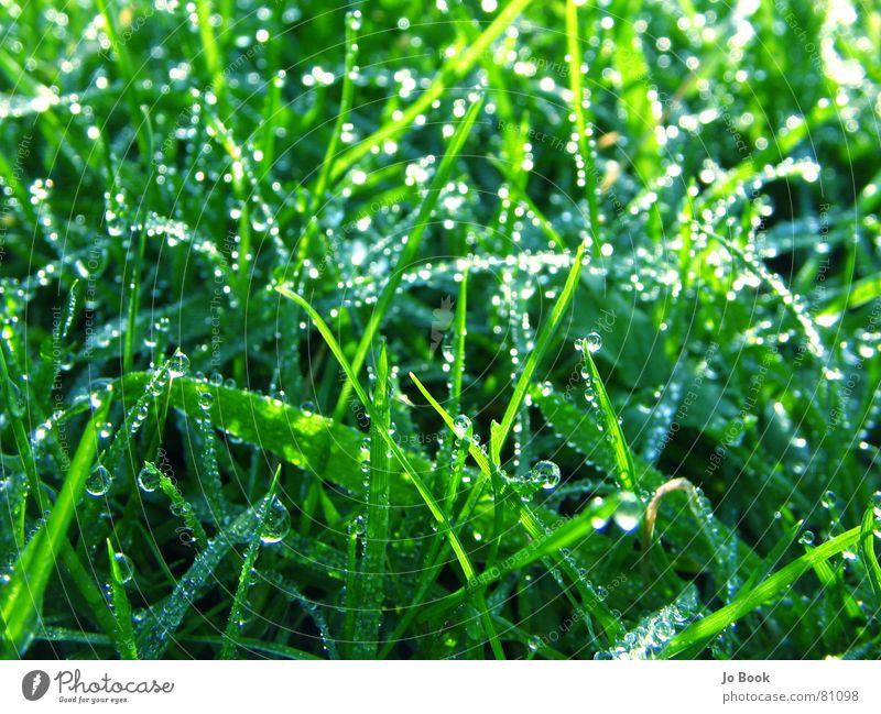 Nature Water Beautiful Green Life Meadow Grass Drops of water Esthetic Lawn Dew Grassland Heavenly Tasty Slick