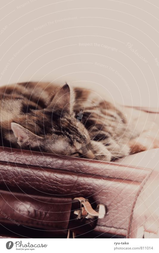 Cat Beautiful Calm Animal Baby animal Happy Moody Lie Contentment To enjoy Cute Soft Sleep Retro Serene Pet