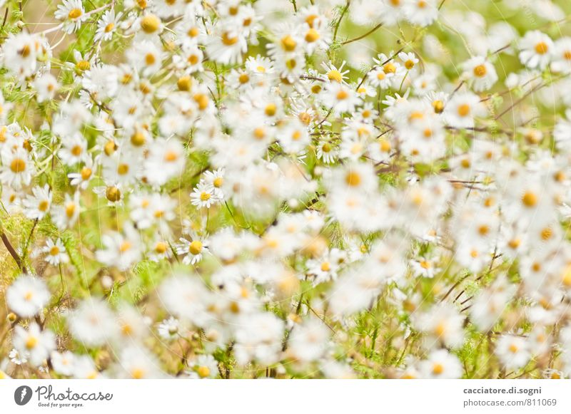 Nature Plant Green Beautiful Summer White Emotions Meadow Natural Freedom Orange Dream Design Illuminate Elegant Blossoming