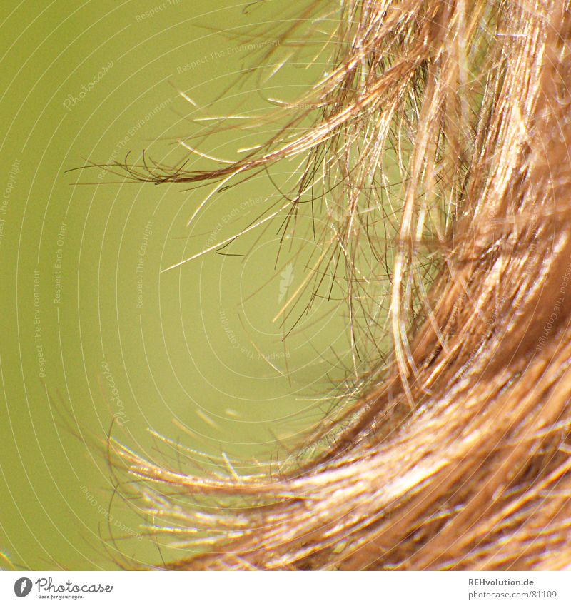 Green Beautiful Cold Hair and hairstyles Brown Waves Point Bathroom Dry Hairdresser Long-haired Disheveled Laundered Curly hair