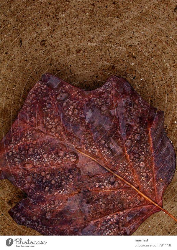 Leaf Autumn Garden Park Rain Brown To fall Transience