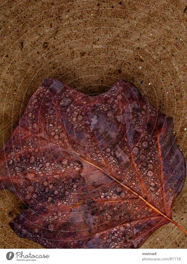 Leaf Autumn Garden Park Rain Brown To fall Transience