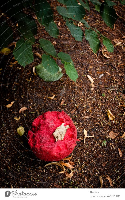 played out. Leisure and hobbies Ball Earth Bushes Toys Plastic Throw Old Broken Round Red foam rubber Colour photo Exterior shot Copy Space top Day 1 Sphere