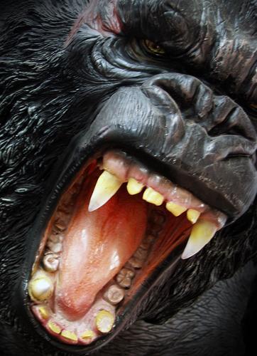 GING GONG Gorilla Pharynx King Kong Monkeys Virgin forest Wilderness Dangerous Peace Black Pelt Mammal Fear Panic Power Force gorillas in the fog throat tame
