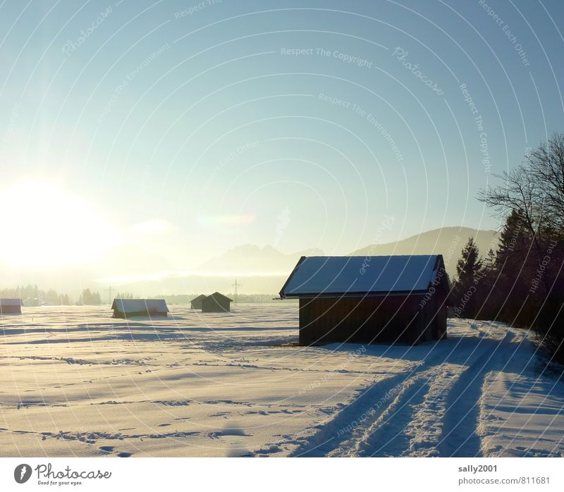 Nature White Sun Tree Calm Winter Cold Meadow Snow Lanes & trails Field Beautiful weather Alps Tracks Serene Hut