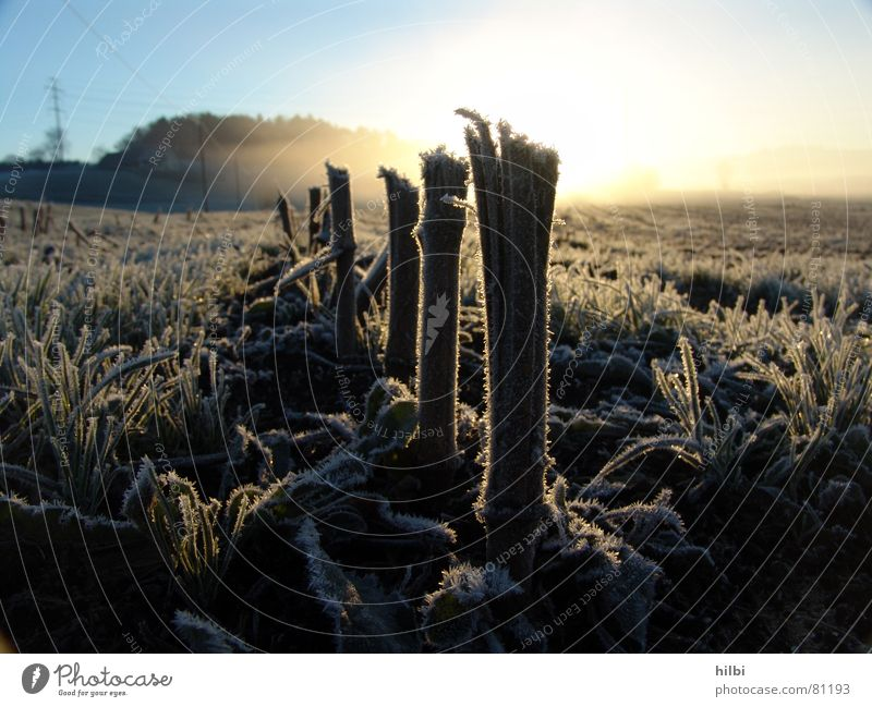harvested Hoar frost Field Blade of grass Sunrise Autumn Winter Harvest Morning Snow