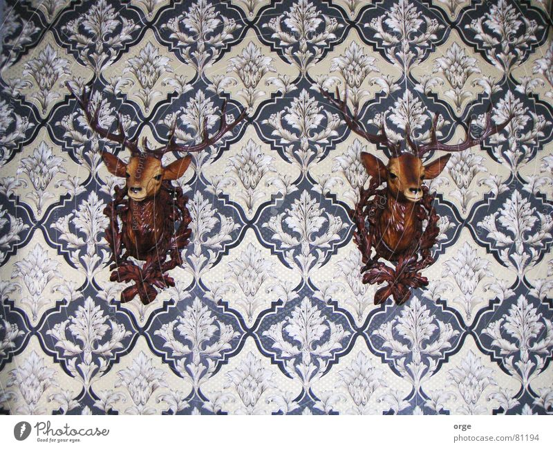 Animal Wall (building) Brown 2 Pair of animals In pairs Pattern Decoration Observe Wallpaper Audience Testing & Control Antlers Deer Adhere to Guard