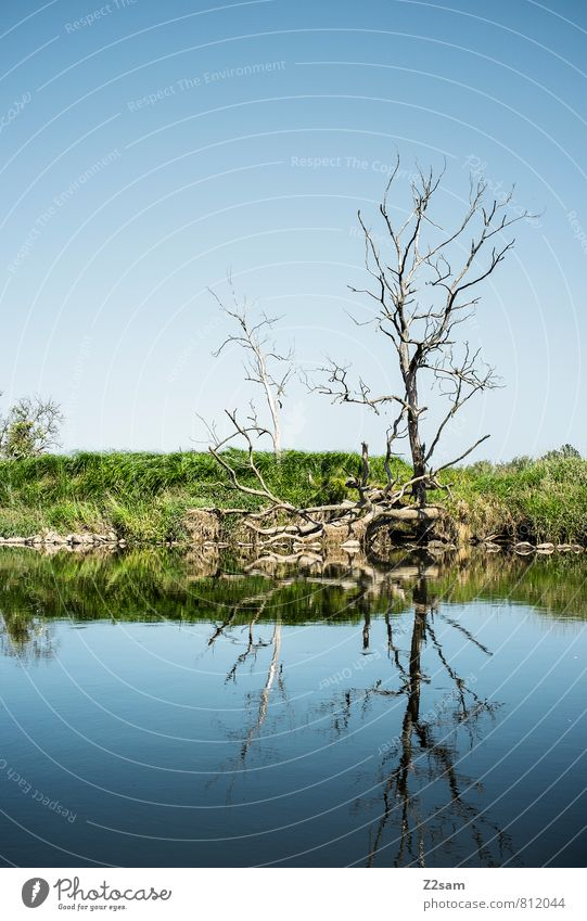 Nature Blue Plant Green Summer Tree Calm Landscape Environment Warmth Meadow Natural Arrangement Elegant Idyll Design