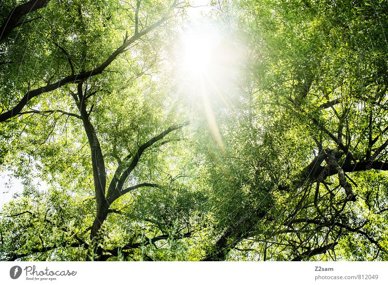Nature Vacation & Travel Green Summer Sun Tree Relaxation Calm Landscape Forest Environment Yellow Warmth Natural Idyll Bushes