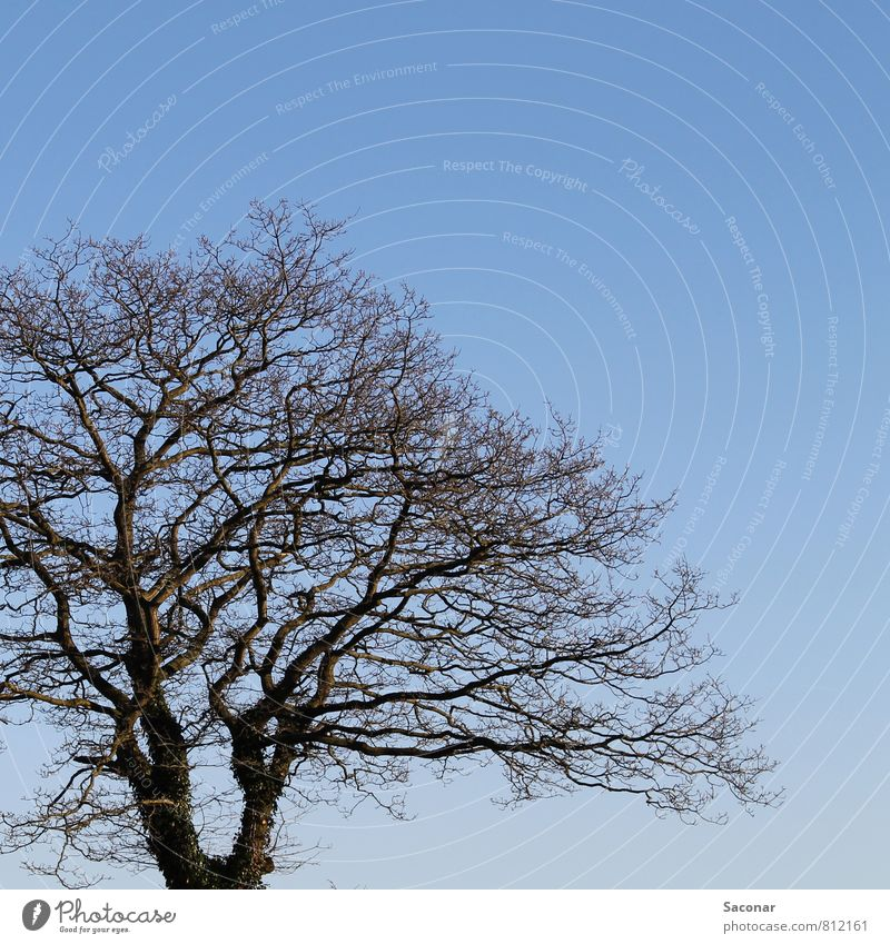 Text space | Tree crown Nature Air Cloudless sky Spring Beautiful weather Free Bright Gloomy Blue Brown Perspective Section of image Treetop Branch