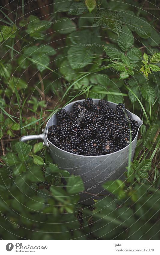 blackberries Food Fruit Blackberry Nutrition Bowl Pot Healthy Eating Nature Plant Bushes Foliage plant Agricultural crop Garden Fresh Delicious Natural Wild